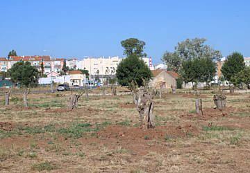 Parque Urbano da Várzea ganha 600 árvores e 20 mil arbustos