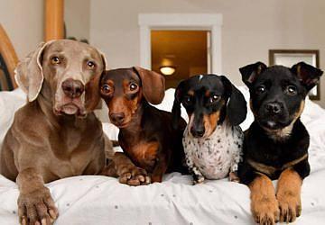Câmara de Setúbal atualizou o Regulamento de Saúde e Bem-Estar Animal