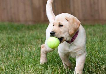 Tem um cão? A Academia de Padel de Setúbal oferece-lhe bolas para brincar
