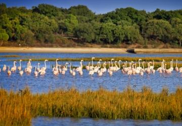 Está a chegar um webinar para conhecer as aves mais famosas do Estuário do Sado