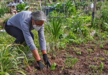 Câmara de Setúbal vai alargar o projeto das hortas urbanas para a Algodeia