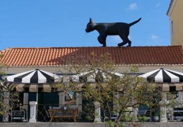 Apareceu este gato preto gigante num telhado da Praça do Bocage