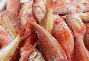 Olhó peixe fresquinho: a Semana do Salmonete está de volta a Setúbal